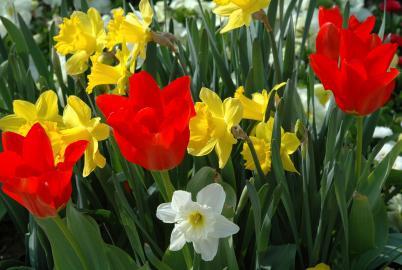 Gartenpflege im März
