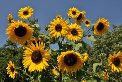Gartenpflege im August